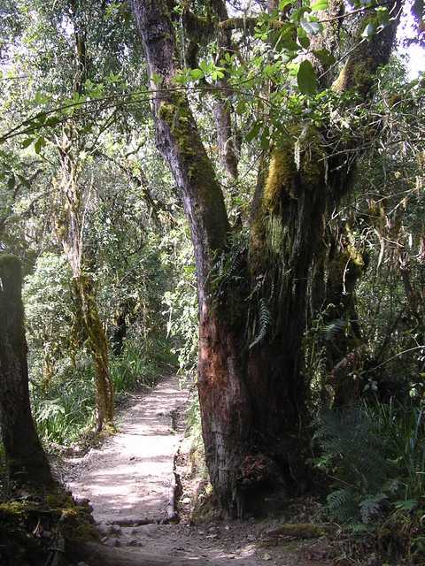 Mount Kilimanjaro's Montane Forest