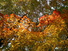 Autumn in progress - wave of Autumn foliage