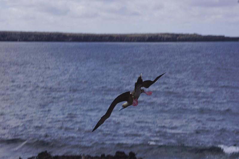 galapagos genovasa 65