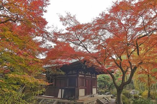 【写真】2013 紅葉 : 白沙村荘/2020-12-28/IMGP3716