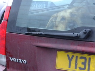 Dogs and Volvos