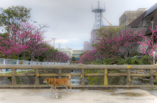 与儀公園 | Naha City, Okinawa #5