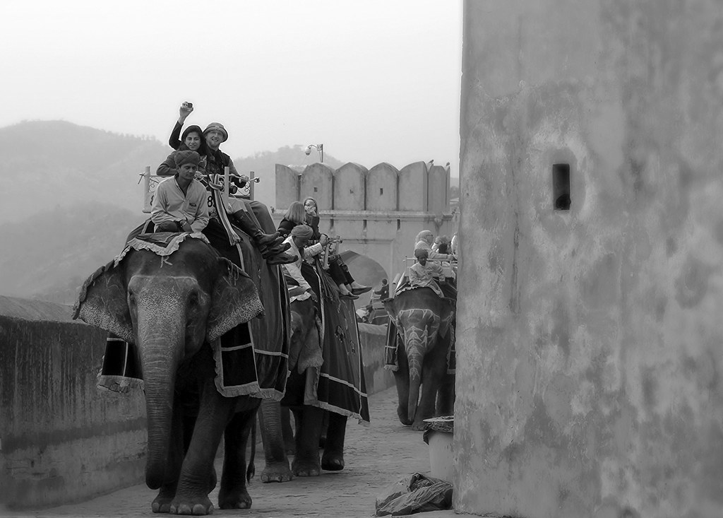 Elephants - Jaipur