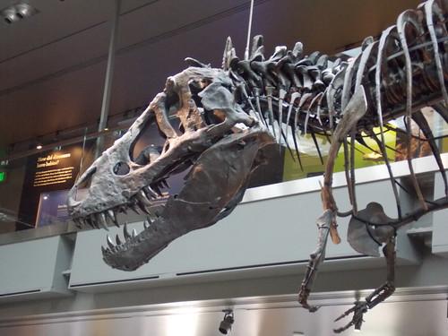 LA County Museum of Natural History (Photo Diary) Oarfish Skull
