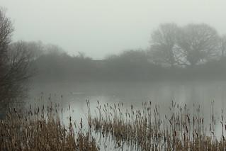 A misty morning...