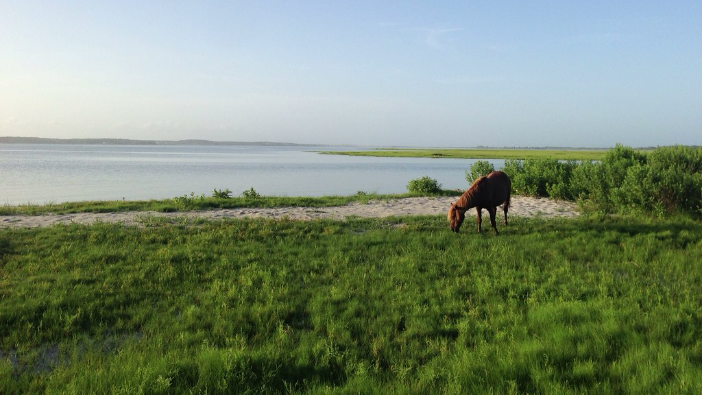 Assateague Island - Horse