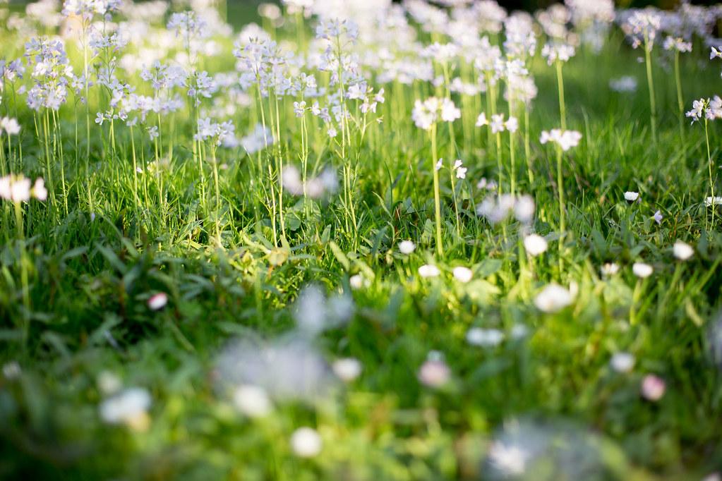 Spring spring spring !