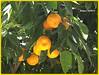 Toledo 15 Naranjo.CR2