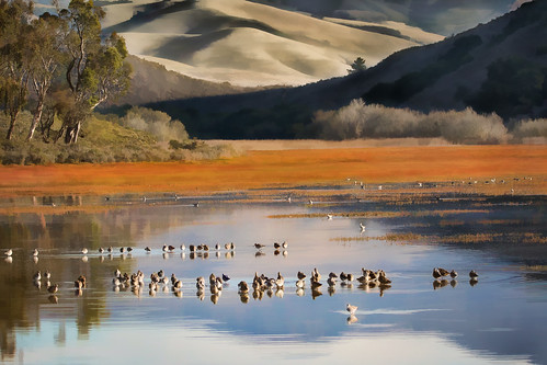 california usa landscape ©alicecahill sanluisobispocountymorning centralcoast marinaspit estuary artistic art morrobay