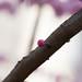 Bourgeon - Petit Cerisier deviendra grand - A bientôt ! by Loanne Lo ou Lolo