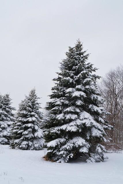 Snowstorm Palmer Park