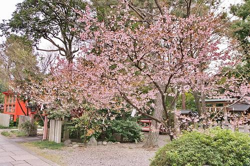 【写真】2013 桜 : 車折神社/2019-09-15/IMGP8801
