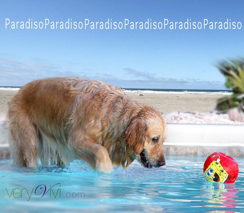 Summer Paradiso