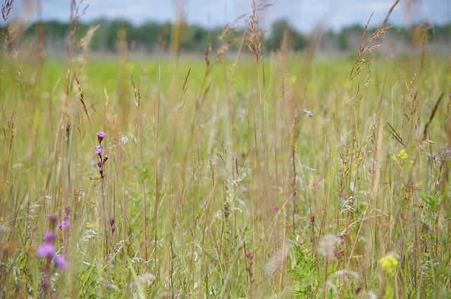 Tall-grass prairie grassland community