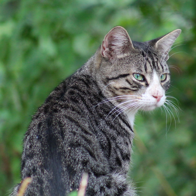 jack o lantern cat