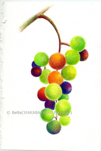 2013_00_08_grape_01_s by blue_belta
