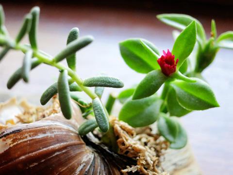 tinyplant2-0913