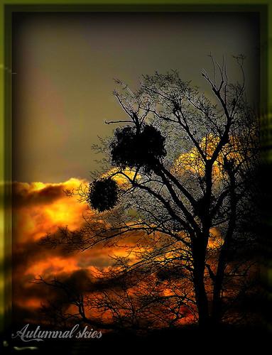 trees colour nature sunshine night golden exposure skies glow shadows nightshot autumncolours mistletoe cheltenham autumnjoy amberglow ipiccy
