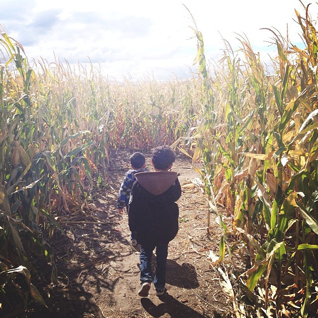 If you need us we're busy getting lost in a giant BYU corn maze (maize? --> get it?)  #cornbellys