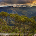 Afternoon Glory || KINGS TABLELANDS by rhyspope