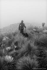 Near Nevado del Tolima