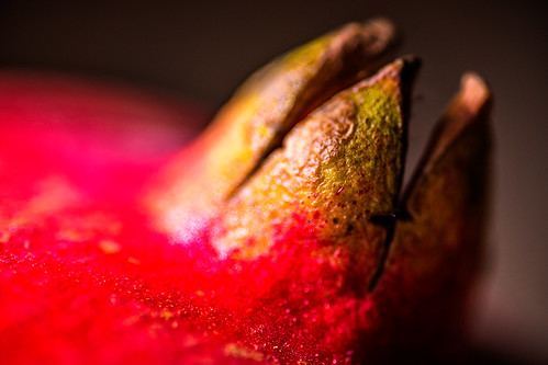 pomegranate detail by joeeisner