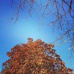 #autumn #bluesky #london #greenpark
