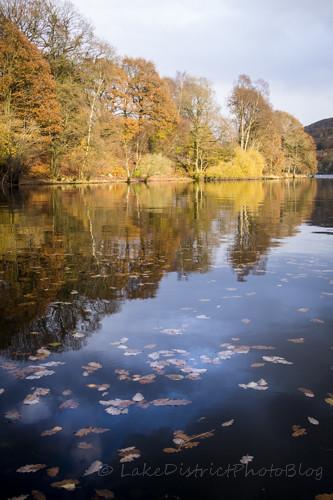 ウィンダミア湖に浮かぶ落ち葉