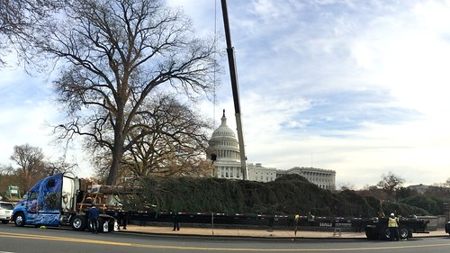 Capitol Christmas Tree arrives at Capitol
