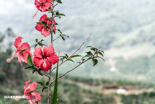 road trip travel mountains flower floral highlands flickr view country vietnam adventure motorcycle vista dalat wanderrlust