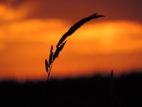 sunset silhouette nikon scenery britishcolumbia memberschoice livingjewelsofnature preciouslivingjewelsofnature