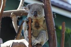 San Diego Zoo 2014