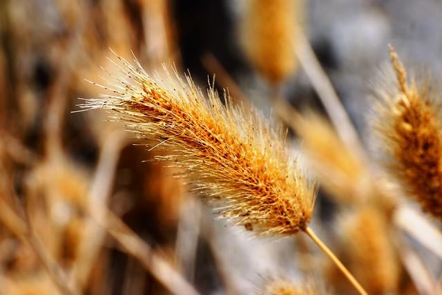 Grain Macro