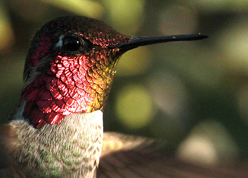 143532-1.jpg by Robert W Gilcrease