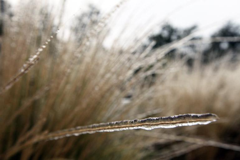 web_grass_0017
