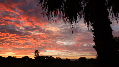 morning pink orange tree silhouette night clouds sunrise dawn flickr palm mullhaupt jimmullhaupt