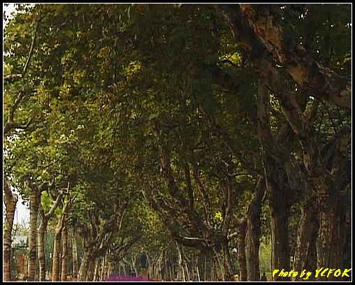 杭州 西湖 (其他景點) - 086 (湖濱路的湖畔花園)