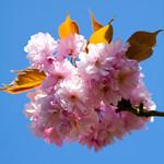 Basing Blossom