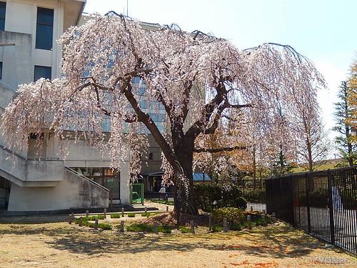 仙台市若林区役所
