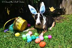 Easter Bullie 1
