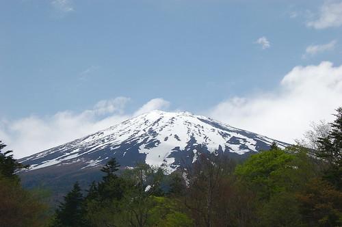 ★ヤマシャクヤクとミヤマスミレ★富士山の森から…