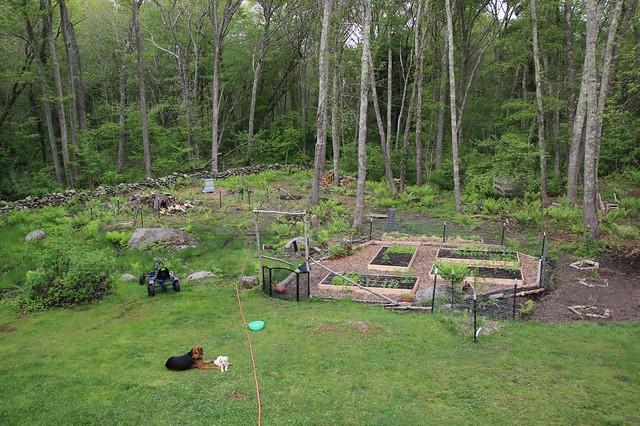 in my garden : may 28