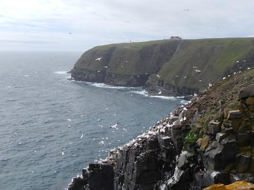 Cape St Marys - 5
