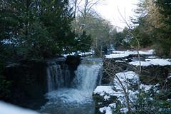 Winter 2013 (Jesmond Dene)  (11)