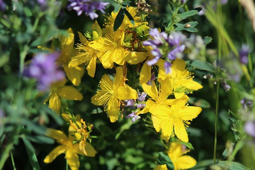 IMG_0207_Yellow_Flowers
