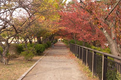 【写真】2012 紅葉 : 長岡天満宮/2020-10-09/IMGP6553