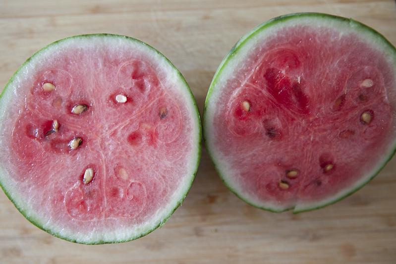 Watermelon HarvestIMG_3534