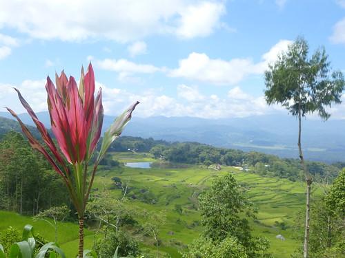Sulawesi13-Lo'ko Mata-Ke'pa (36)