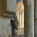 Artonne (Puy-de-Dôme) - 15 ©roger joseph