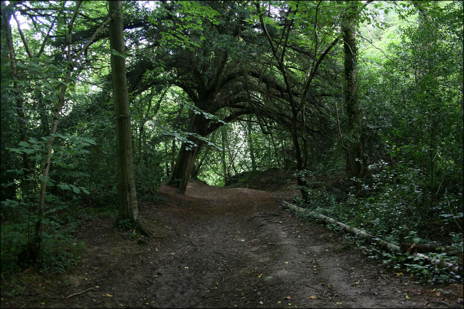 Near Balcombe